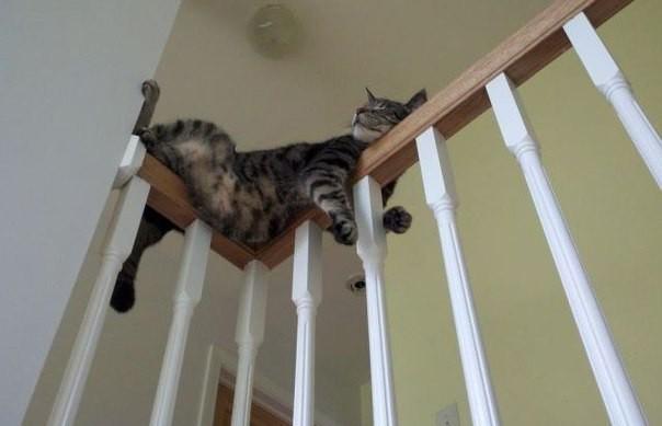 Кот «удобно» расположился на перилах и рассмешил соцсети