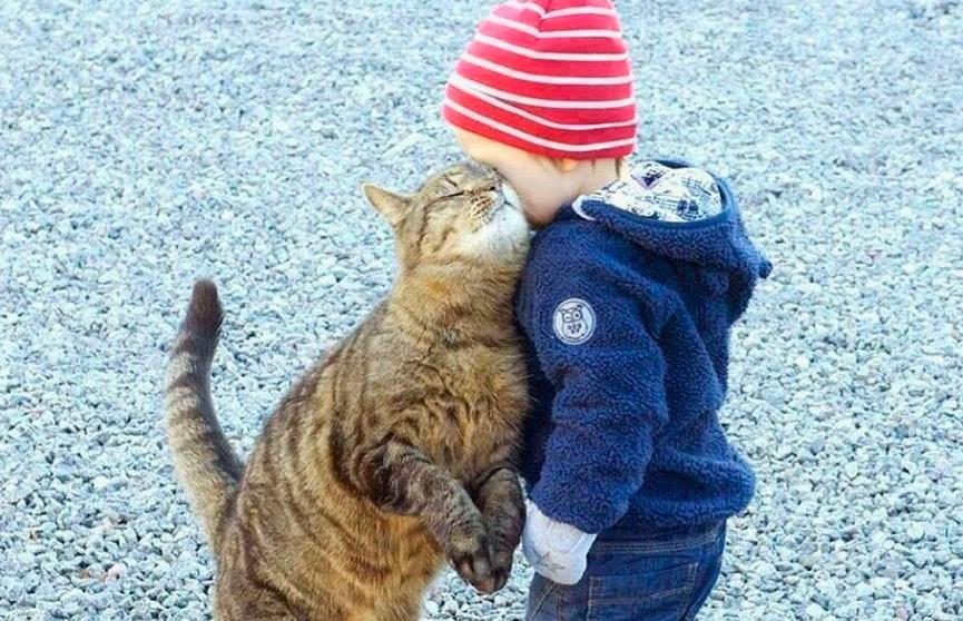 Двойная доза умиления! 10 фотографий детей с котами