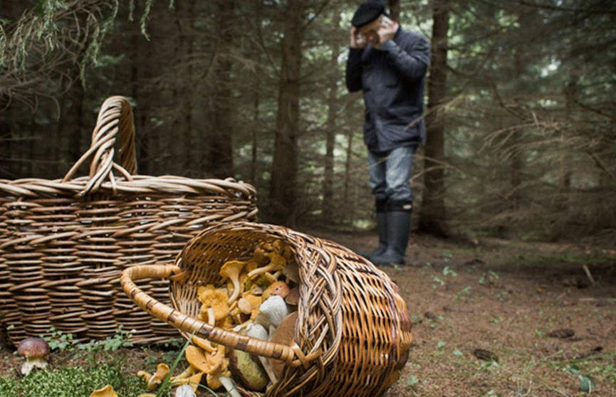 Истощённого грибника нашли в Витебской области: он провёл в лесу почти неделю