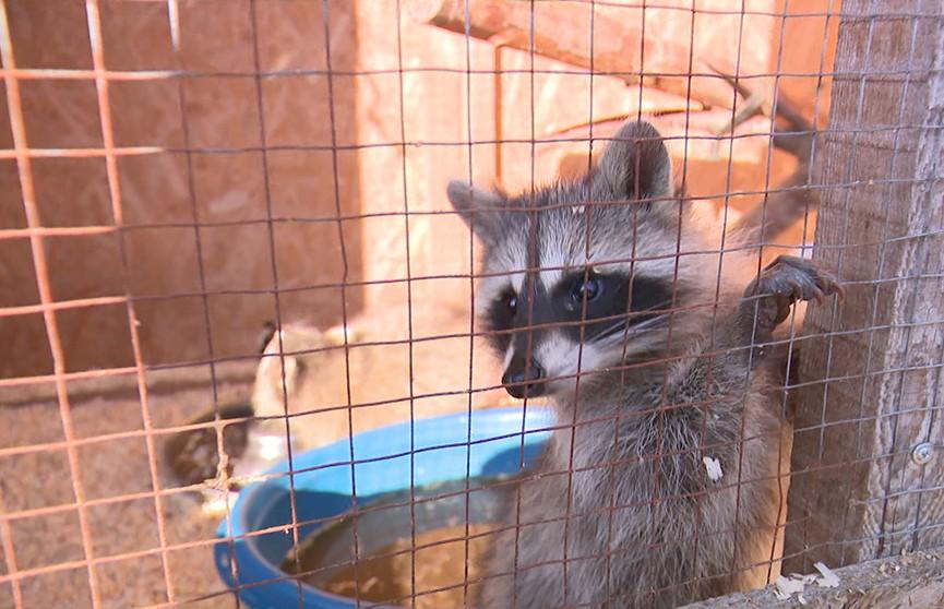 Животных из контактных зоопарков выставляют на продажу
