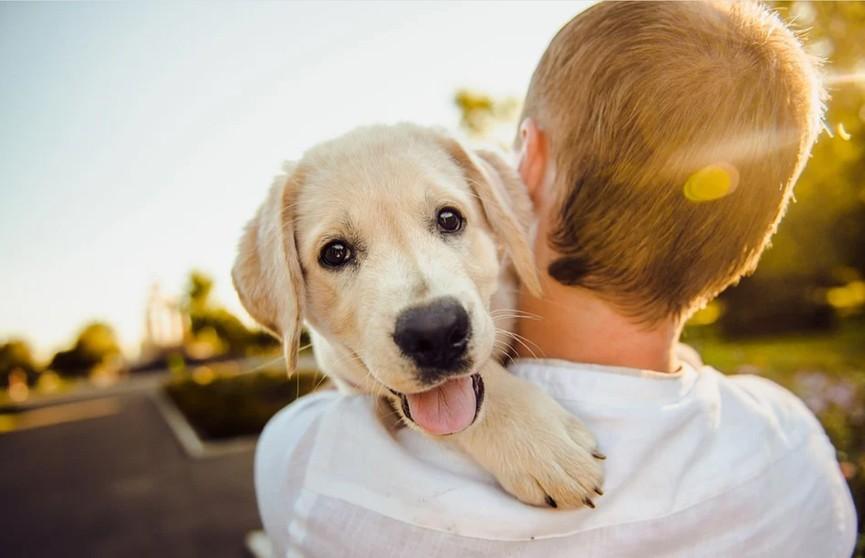 Собака схватила зубами подушку – хозяину удалось забрать. Но посмотрите, что пес сделал в отместку – это неожиданно! Вы 100% будете смеяться! (ВИДЕО)