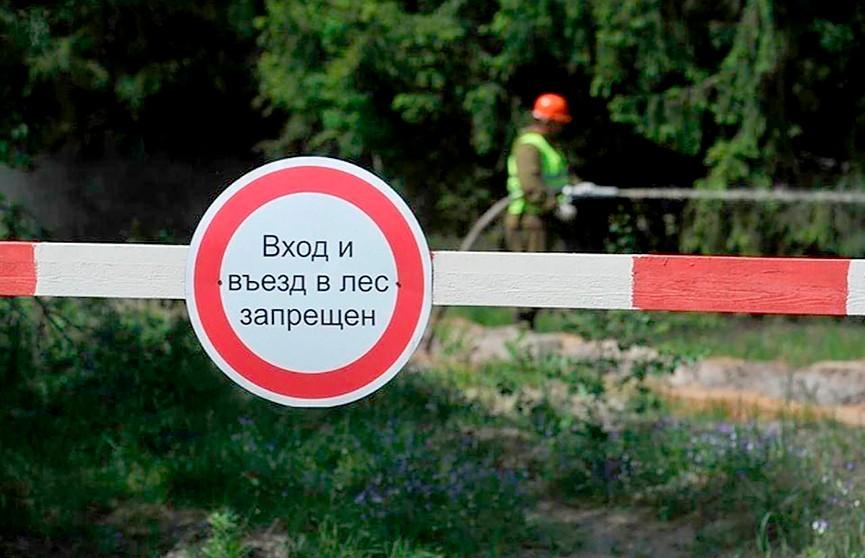 Запрет на посещение лесов введен уже в 77 районах Беларуси