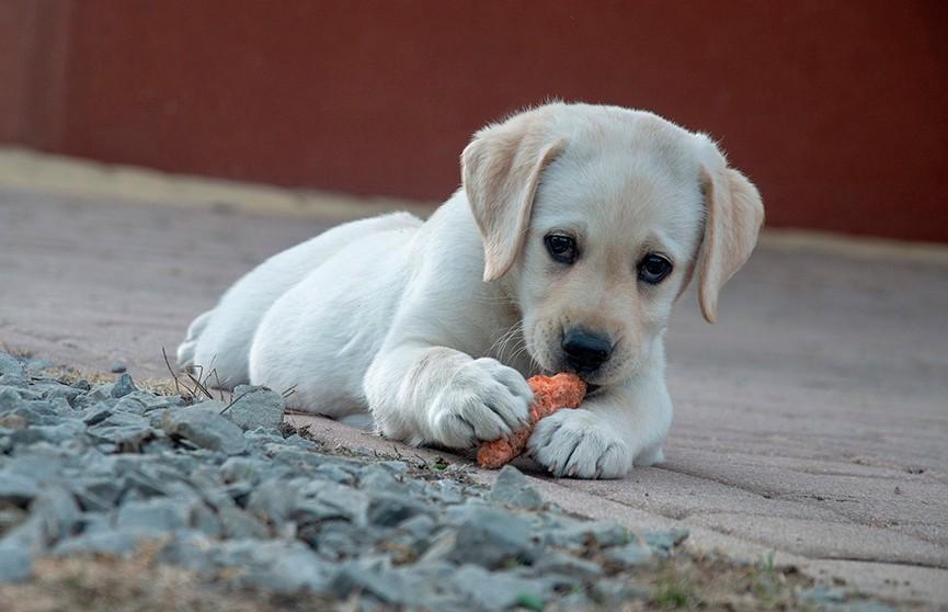 Чем нельзя кормить собак, рассказали кинологи