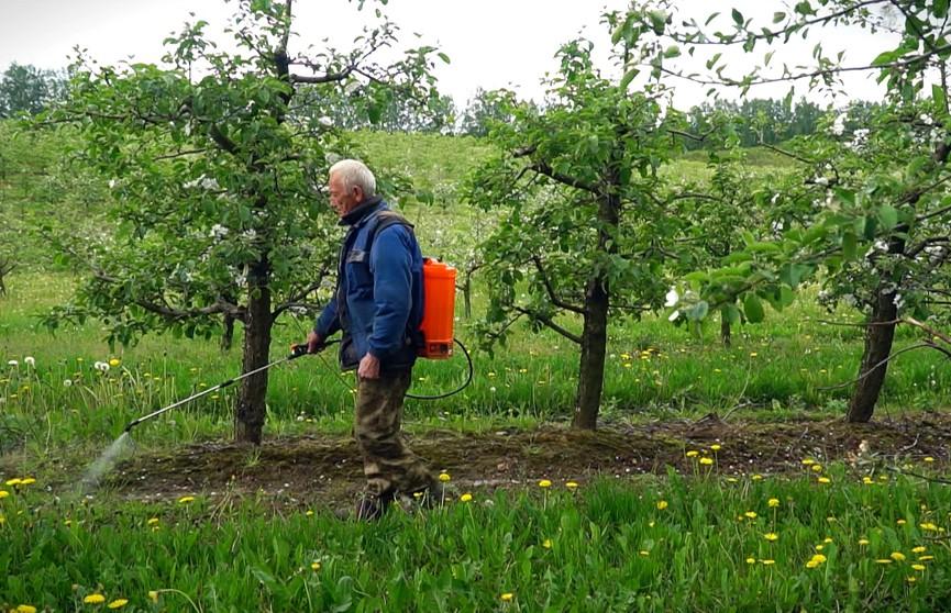 Что сделать в саду, чтобы собрать хороший урожай?