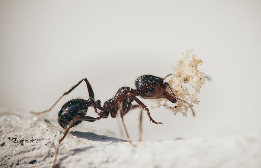 В Дубае открыли «ресторан» для муравьев. На открытии собрались толпы