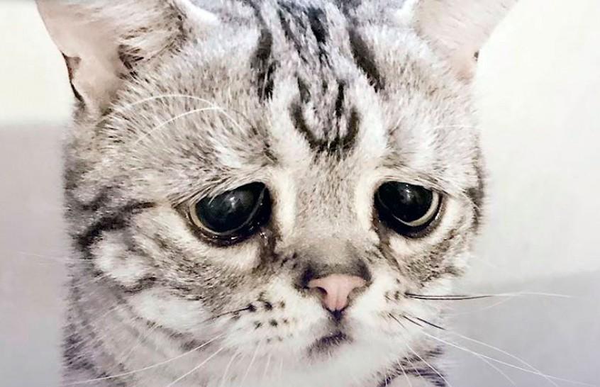 А как же я? Кот, испытывающий муки ревности, рассмешил Сеть
