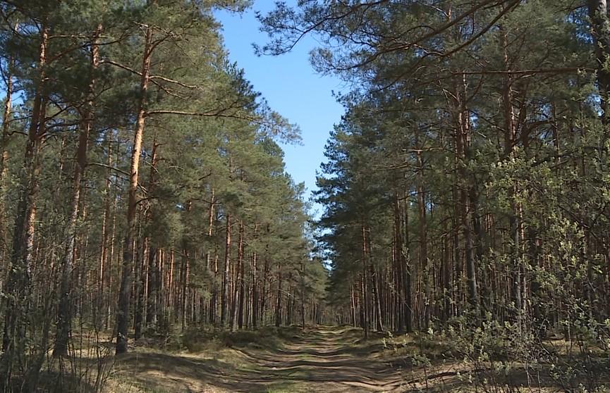 Ограничения на посещение лесов действуют в некоторых районах Гомельской области
