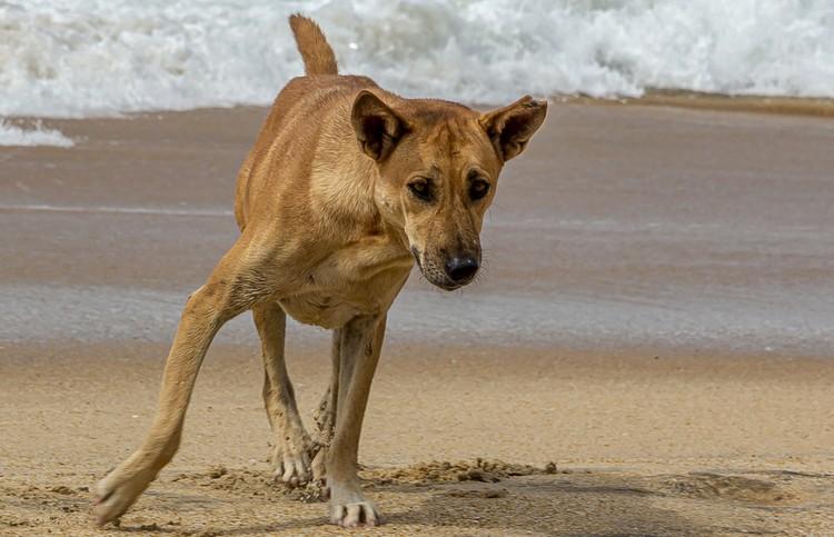 Собака словила в озере огромную рыбу и вышла на берег. Только посмотрите, как ей это удалось? (ВИДЕО)