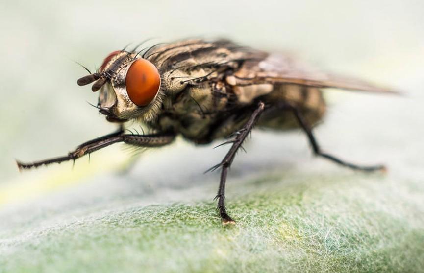 Биолог рассказала, чем опасны комнатные мухи и как от них защититься