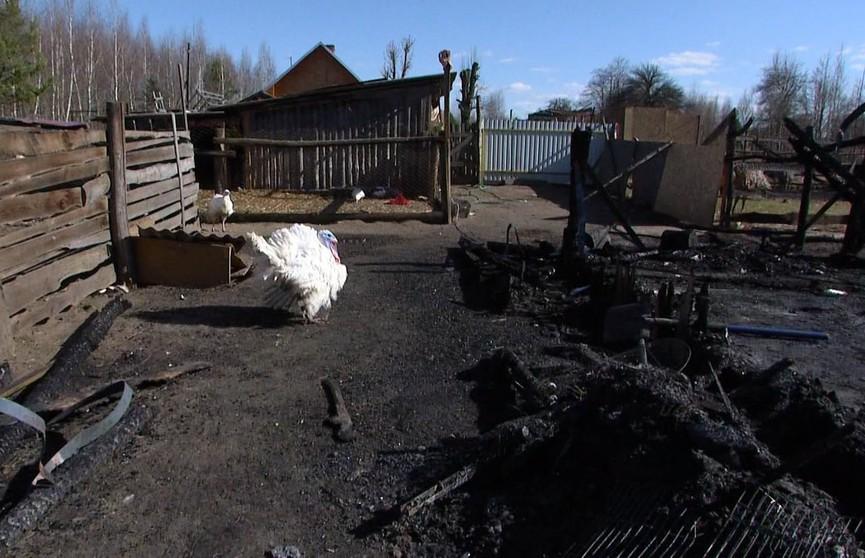 Сгорел единственный на всю Беларусь приют для раненых пернатых