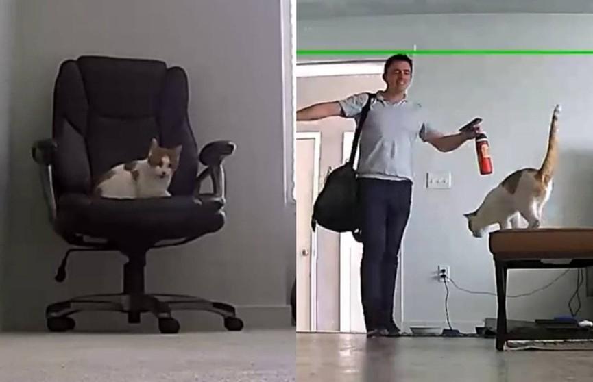 Посмотрите, как кот встречает хозяина с работы. Видео умилило пользователей Сети