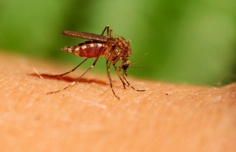 Из-за укуса комара человек может оказаться в больнице. Врач рассказал, в каких случаях такое бывает