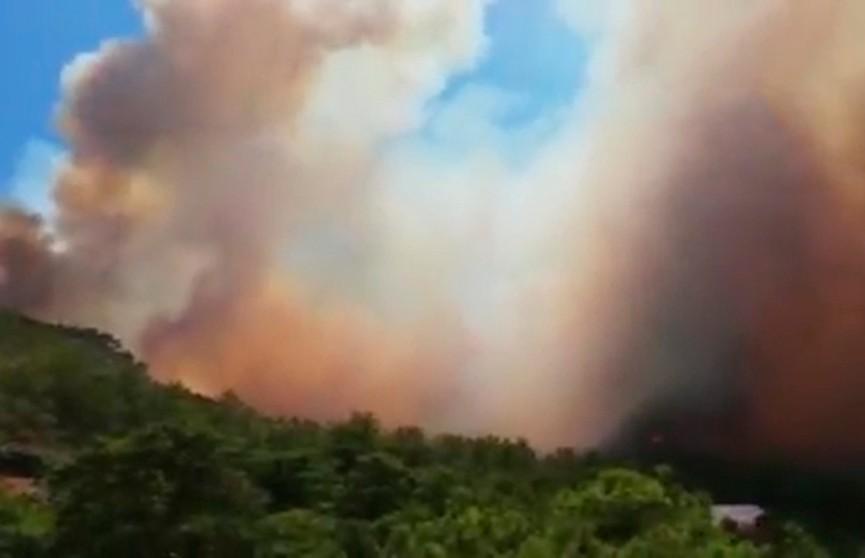 Хвойные леса горят в  турецкой Анталье