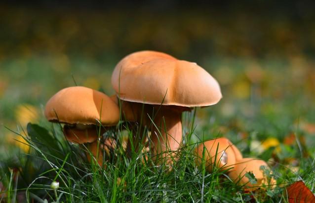 В Добрушском районе двое мужчин отравились грибами.
