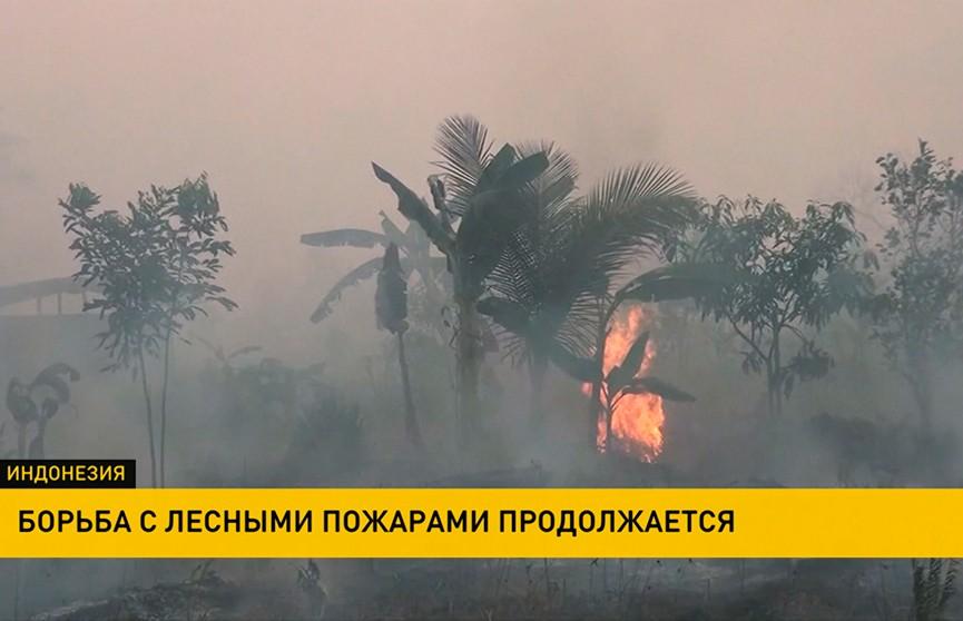 Бизнесмены специально устраивают лесные пожары в Индонезии
