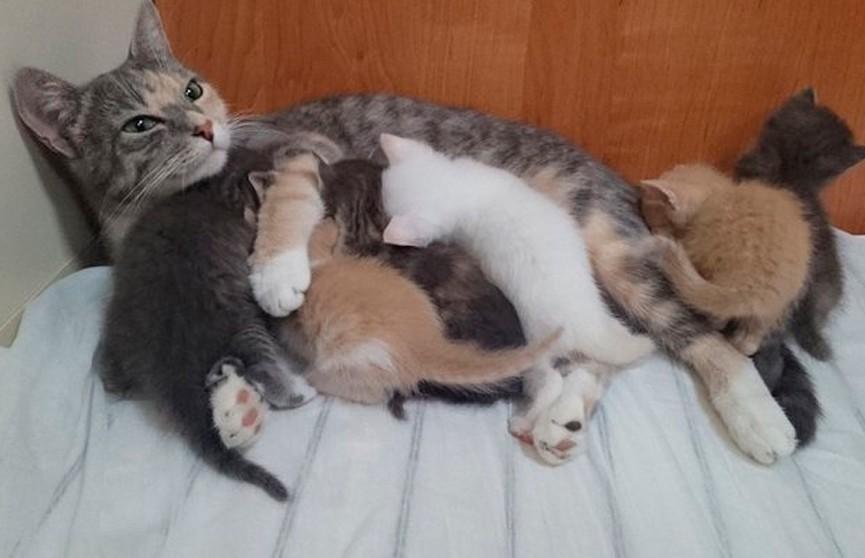 Кошка родила шестерых котят на подводной лодке