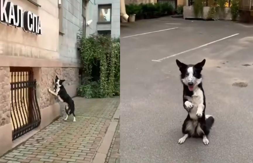 Позирующая собака-модель попала на видео и восхитила Сеть