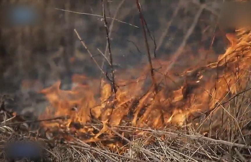 Горят леса в России: дотла сгорели более 100 домов, гектары посевов, погибло множество животных