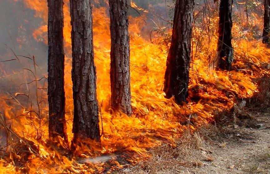 Из-за лесных пожаров в китайской провинции Юньнань объявлен оранжевый уровень опасности