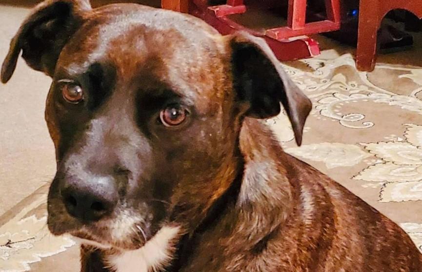 До слез: женщина забрала собаку из приюта и позволила ей лечь на кровать. Посмотрите на реакцию пса!
