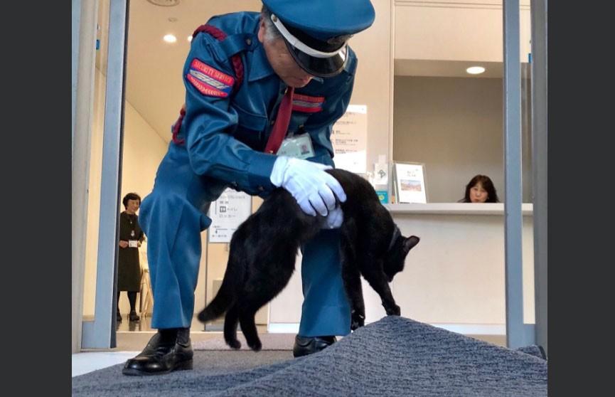 Уличные коты два года пытаются зайти в музей, но всегда проваливают миссию (ФОТО  и  ВИДЕО)