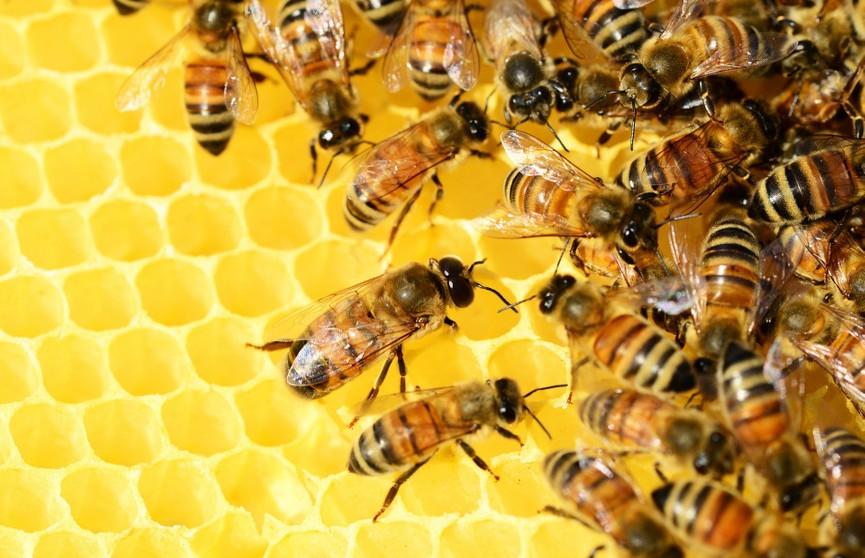 Житель Канады привлек внимание общественности к проблеме вымирания пчел необычным  способом. Вот что он сделал