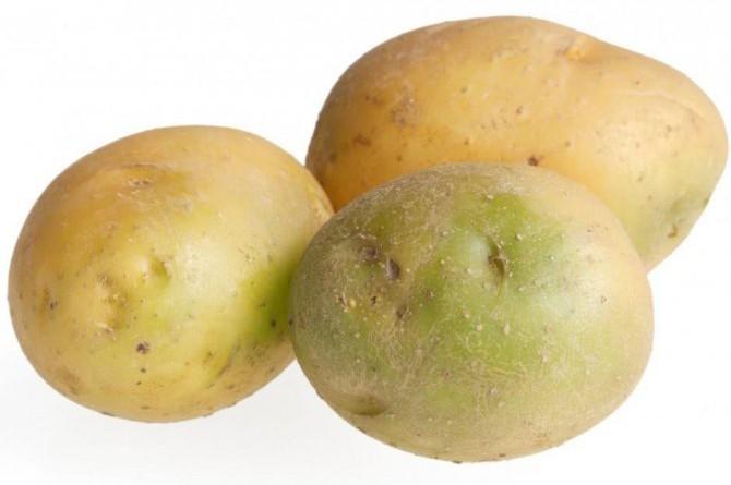 Что произойдёт, если съесть зелёную картошку? 🥔