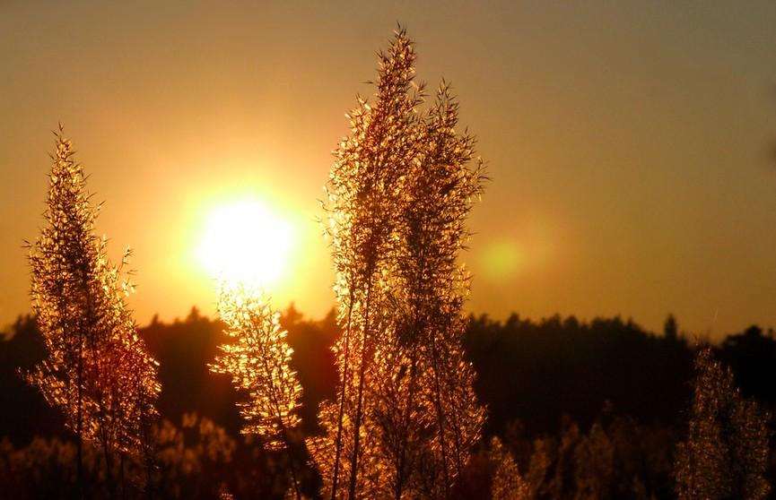 До +36℃! Оранжевый уровень опасности объявлен в Беларуси 12 июля