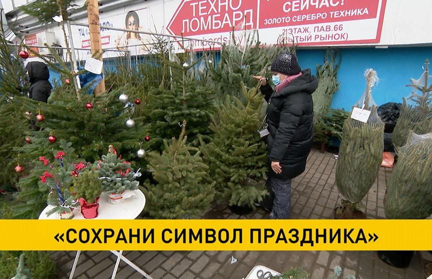 Купить дерево в кадке, а весной посадить: Министерство лесного хозяйства проводит акцию по сохранению елей
