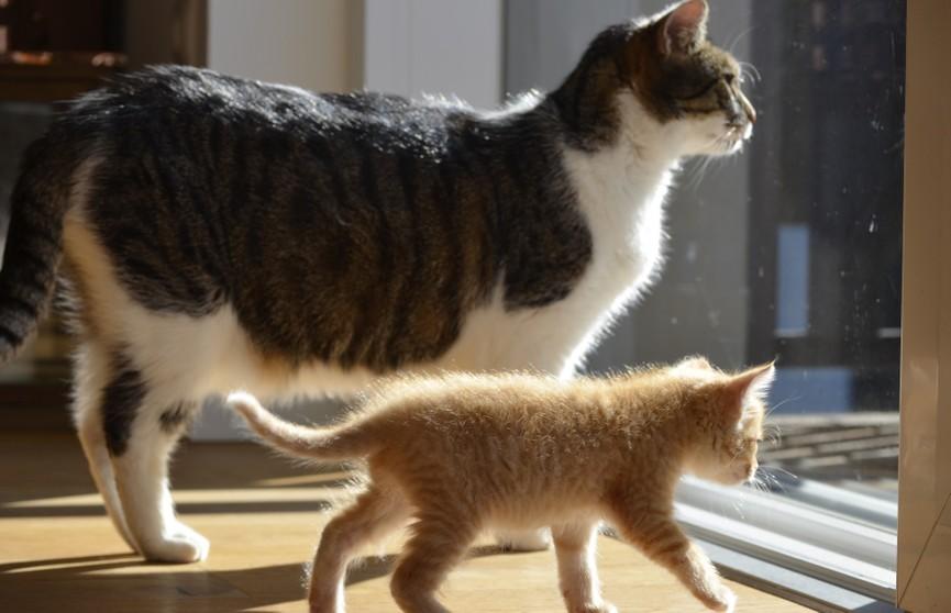 Только посмотрите, как кошка научила котенка спускаться по ступенькам! Невероятно мило! (ВИДЕО)