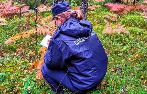 Ушел за грибами и не вернулся: СК выясняет, почему мужчина умер в лесу