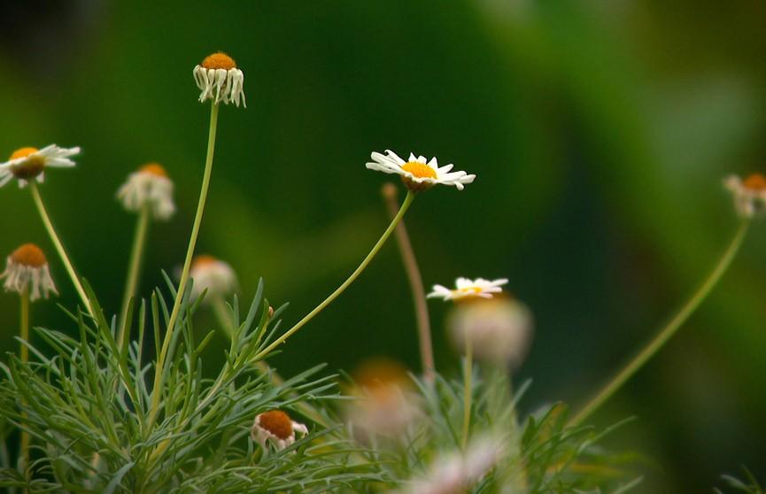 Превратить участок в цветущий оазис: как ухаживать за однолетниками, чтобы они украшали сад до заморозков?