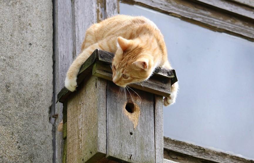 Кот спрятался за шваброй и думал, что его не найдут. Только посмотрите на это – даже стоял на двух лапах! (ВИДЕО)