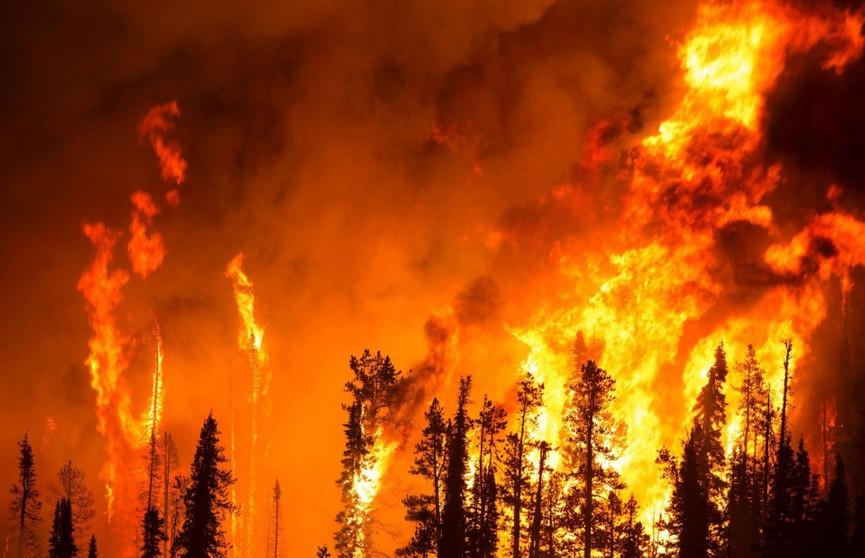 Гигантские лесные пожары охватили Чукотку