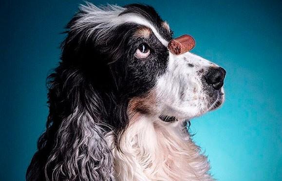 Такого вы еще не видели! Фотограф сделала уникальную серию снимков с эмоциями животных (ФОТО)