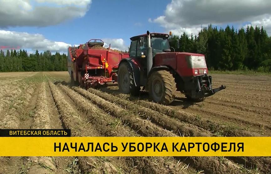 В Беларуси началась уборка картофеля: какую новинку предложат в этом году покупателям?