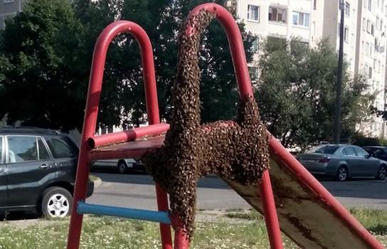 Детскую горку в Минске атаковал рой пчёл