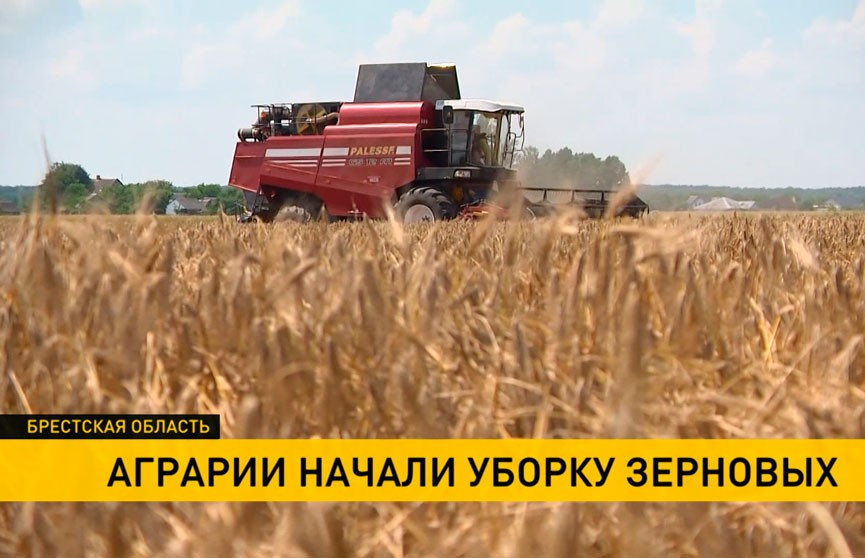 Аграрии Брестской области приступили к уборке зерновых