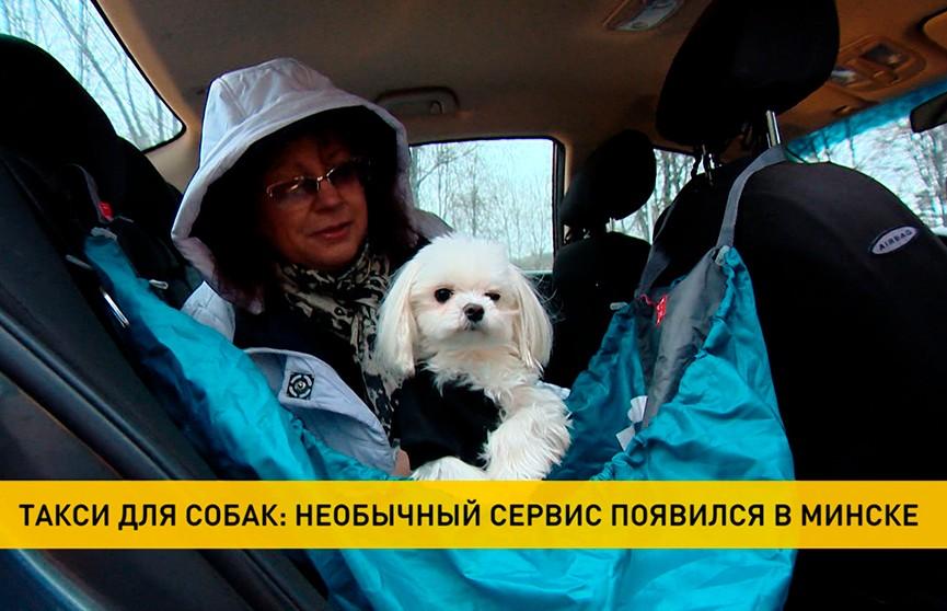 Такси для собак появилось в Минске