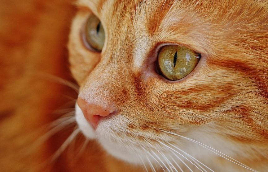 Тайное свидание котов попало на видео и рассмешило Сеть