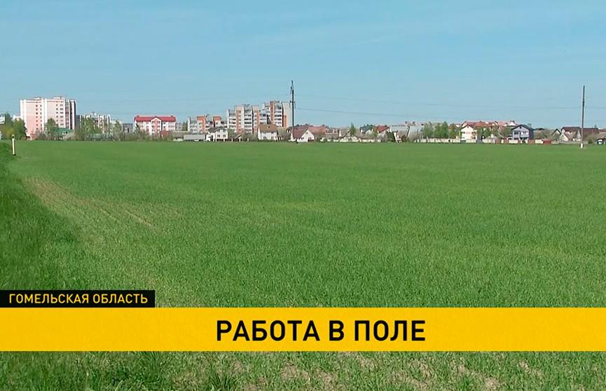 В Беларуси завершается сев яровых зерновых и зернобобовых культур