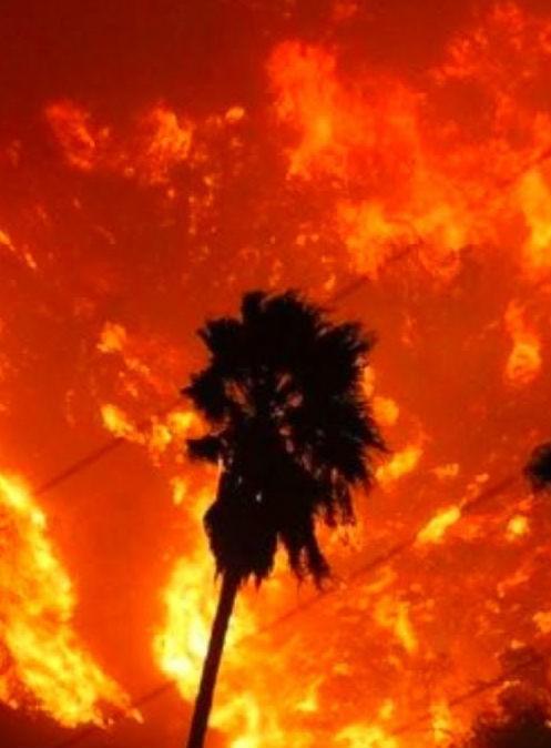 Лесные пожары не прекращают бушевать в США
