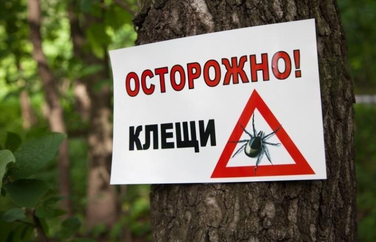 Количество пострадавших от укусов клещей возросло в Минске