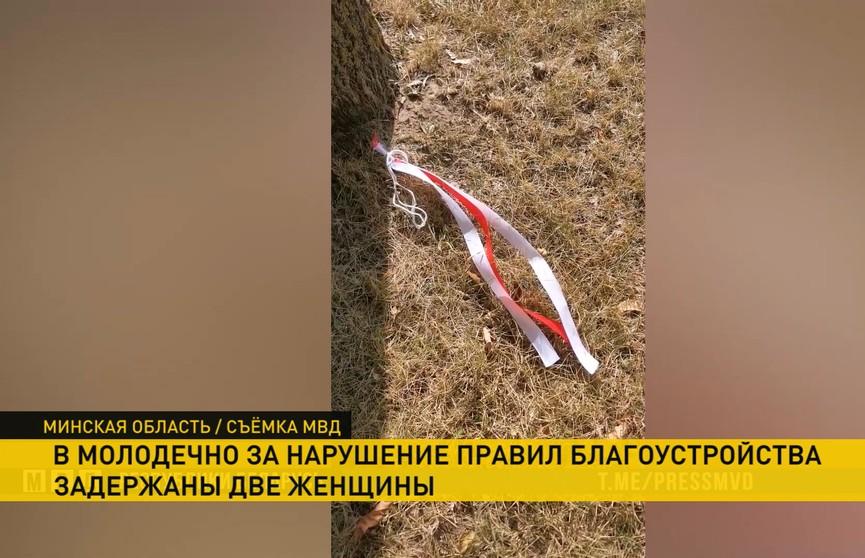 В Молодечно задержали двух женщин, которые забрасывали на деревья красные и белые ленточки