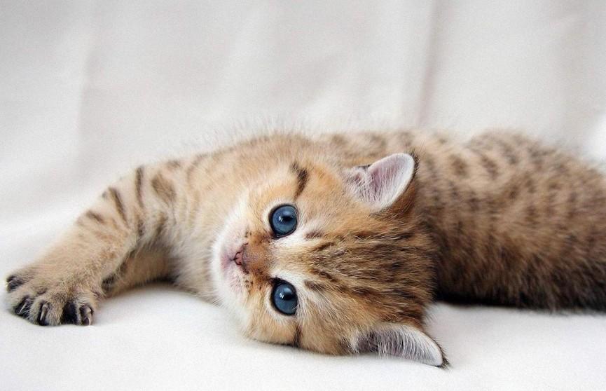 Ролики с «мимишными» животными не только интересны, но и полезны (ПОДБОРКА ВИДЕО)
