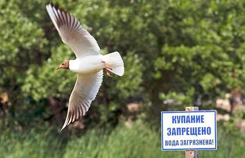Купание для детей ограничили на пяти пляжах Минской области