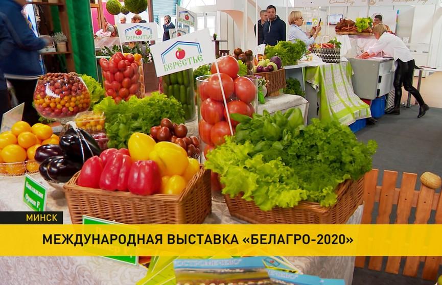 Выставка «Белагро» открылась в Минске: самые лучшие белорусские продукты – под одной крышей