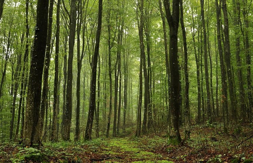 Восьмиклассник испугался грозы и заблудился в лесу: родители вызвали спасателей