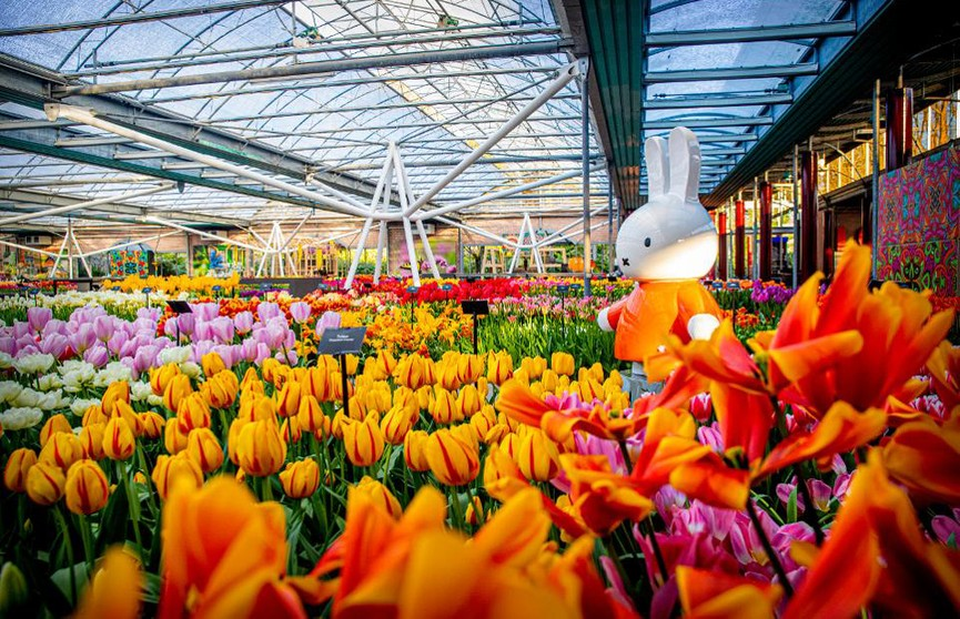 Миллионы тюльпанов можно увидеть на виртуальной экскурсии в цветочном саду Нидерландов