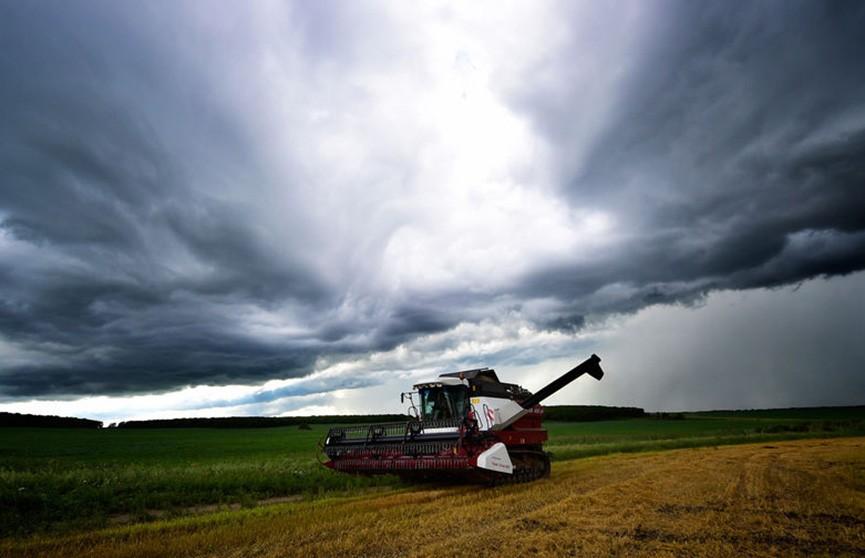 Аграрии помогают сельчанам убирать зерно на частных подворьях
